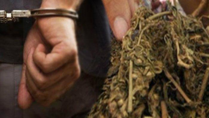 Satres Narkoba Polres Inhu Tangkap Pelaku Penjual Ganja